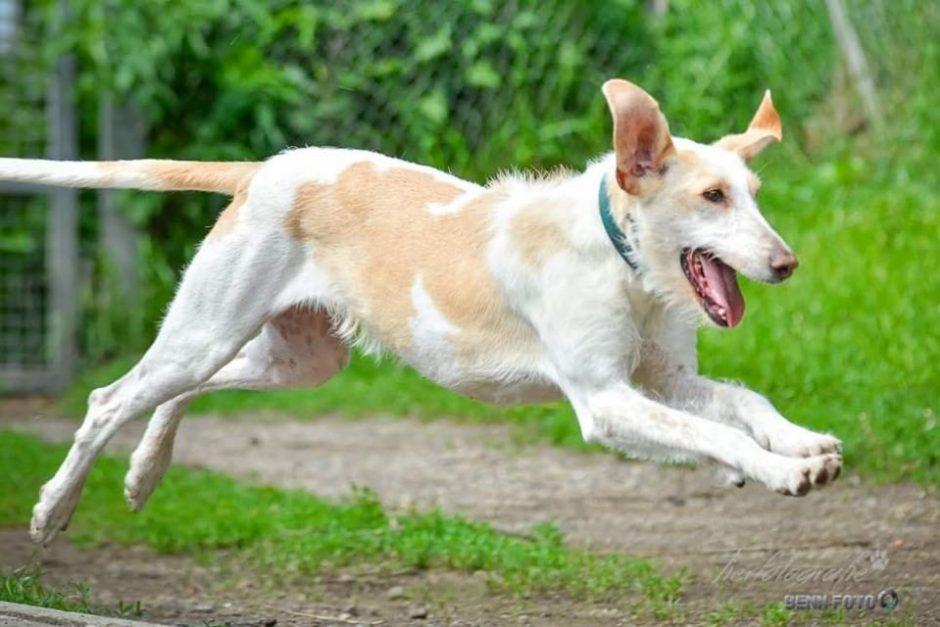Hund des Monats September: Pimpi