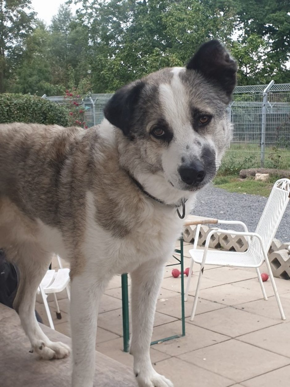 Hund des Monats Oktober: Socke