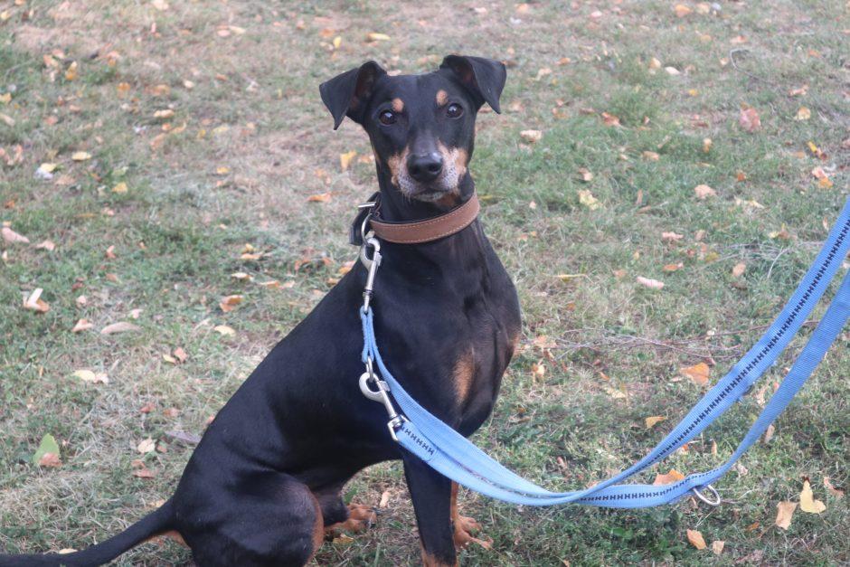 Unser Hund des Monats Januar: Joshi